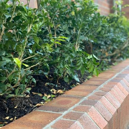 Brick retaining wall in Newcastle laid with feature bricks with plants in the garden bed